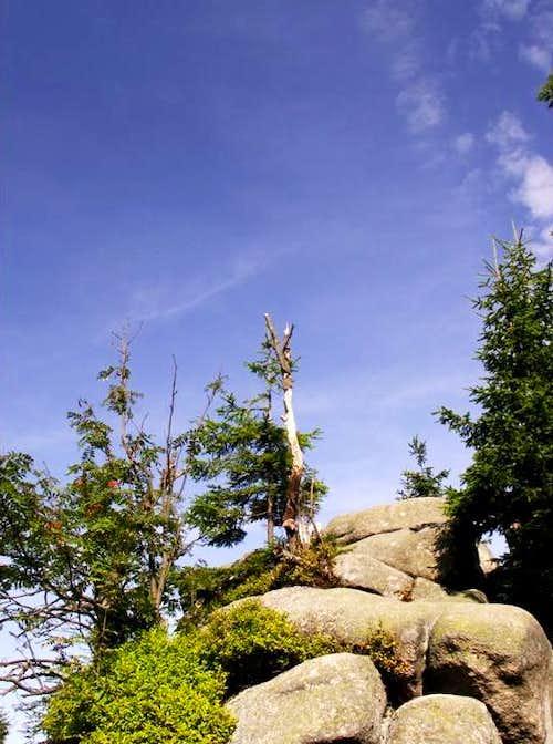 SUMMER IN RUDAWY JANOWICKIE