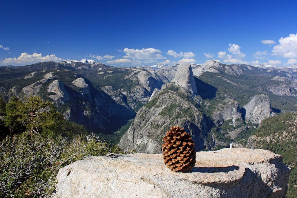 A pine cone's view of Yosemite
