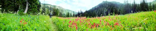 Paintbrush Meadow Pano