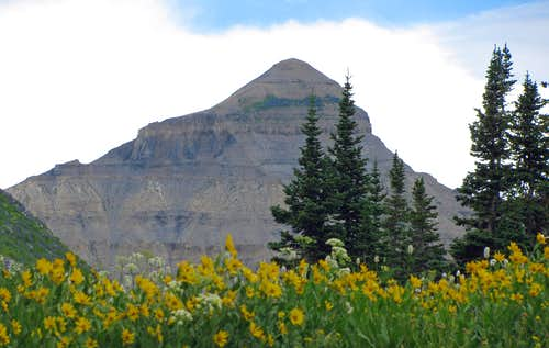 North Timp and wildflowers