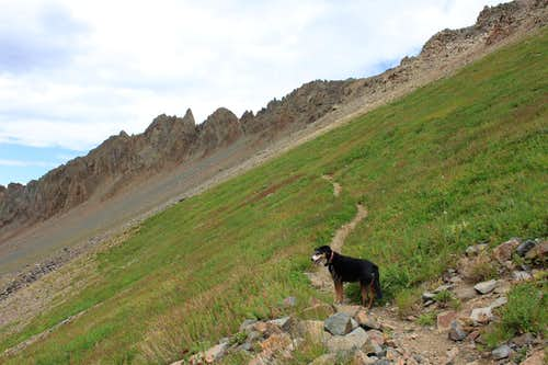 Duchess hiking towards Blue Lake Pass