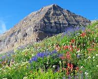 Wildflowers below Timp summit