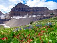 Timpanogos Basin wildflowers