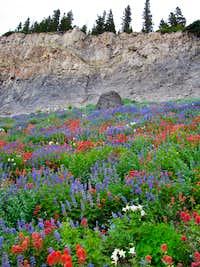 Timpooneke Trail wildflowers