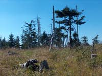 The top of Medvědí Vrch, a battlefield of dead trees.