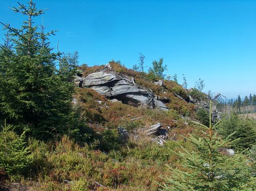 Gneiss outcrop, and field of blueberries