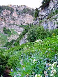 Timpooneke cliffs