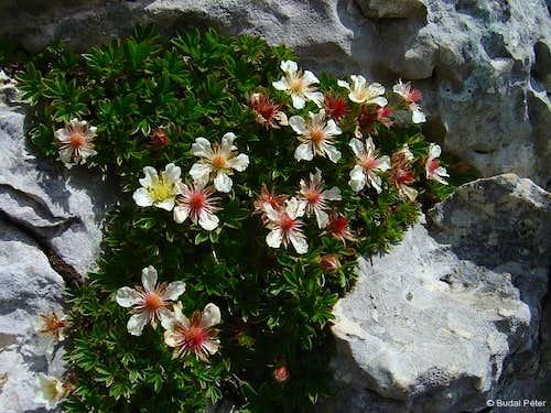 Flora of Durmitor