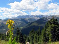 Meadows on Colorado Trail/View of Mt. Massive
