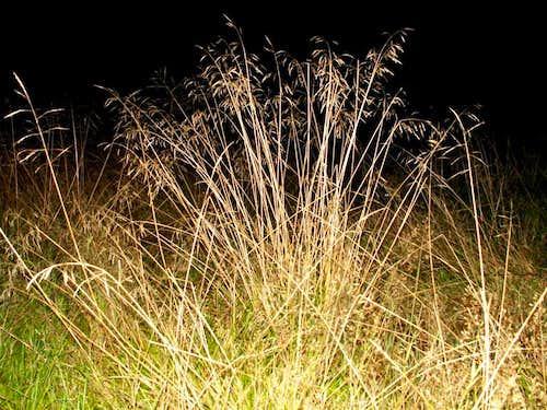 Grass tuft...