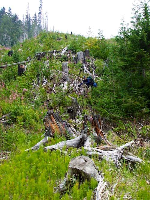 Logging slash above Kinbasket Reservoir