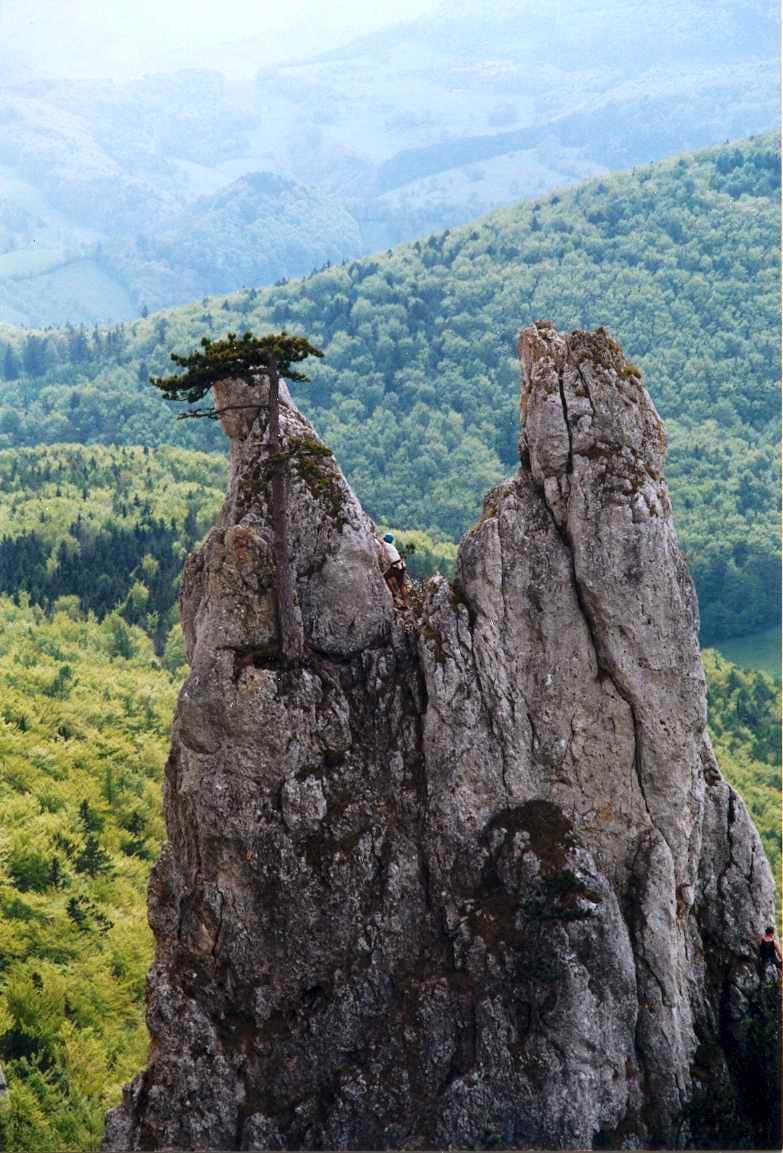 Limestone pillar in the Wienerwald