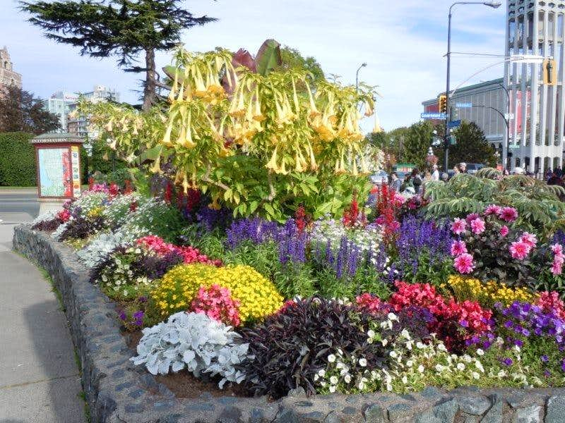 Flowers in Victoria