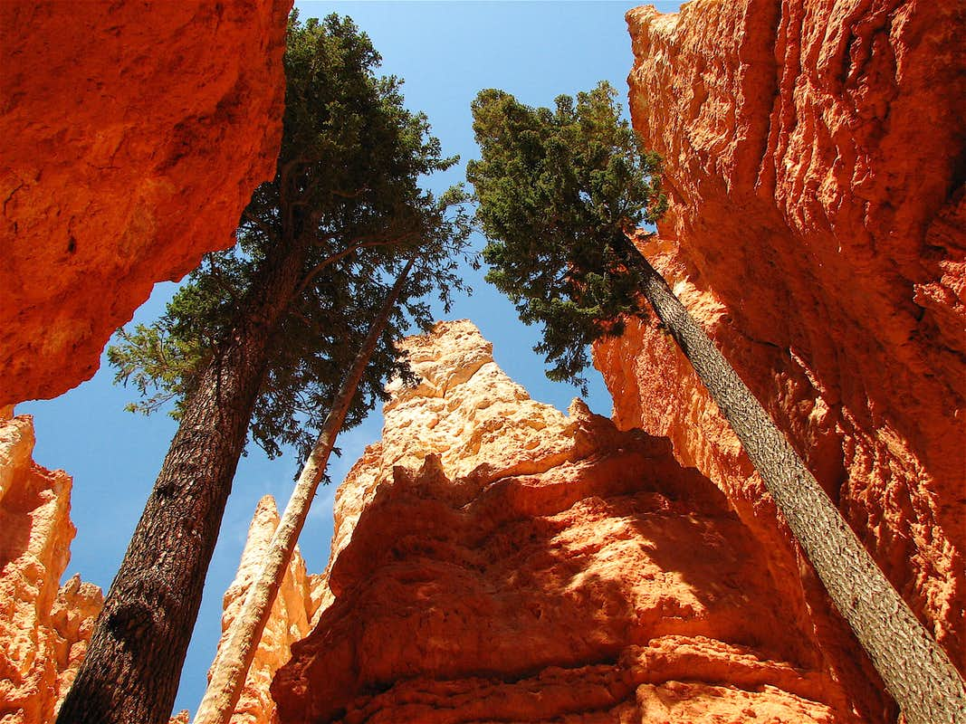 "bryce canyon national park big and beautiful singles Utah is home to quite a few of america's top national parks meet the ""mighty 5"" – arches, bryce canyon, canyonlands, capitol reef and zion."