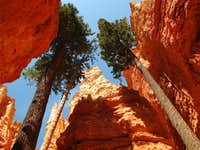 Wall Street - Bryce Canyon