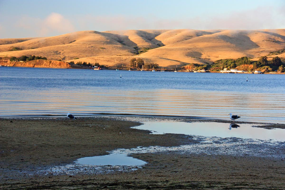 related keywords suggestions for tomales bay