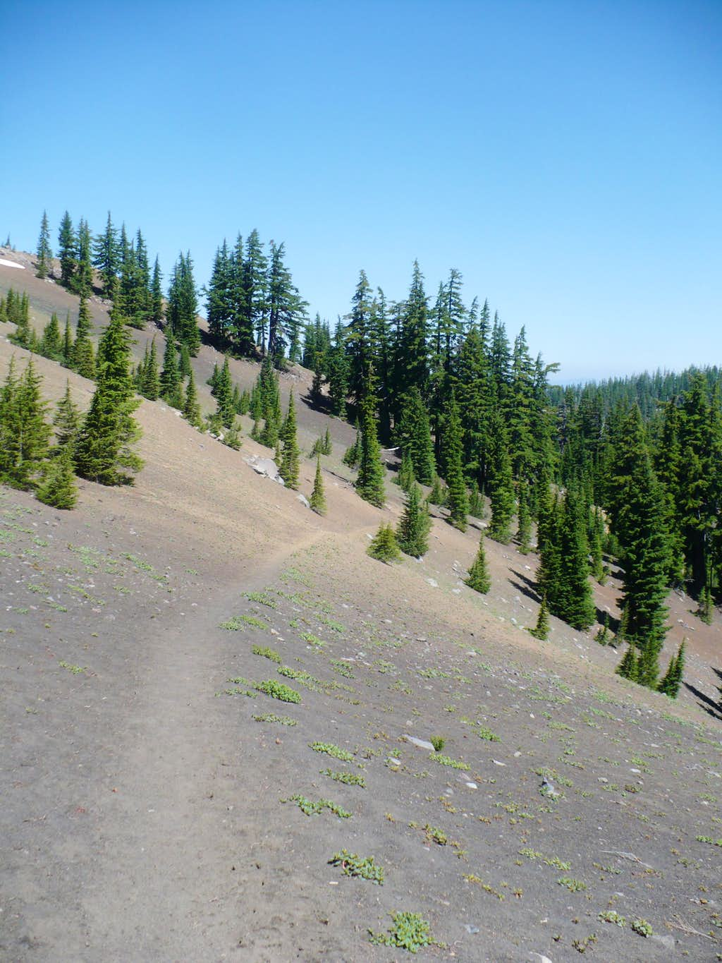 Pacific Crest Trail near Minnie Scott Spring