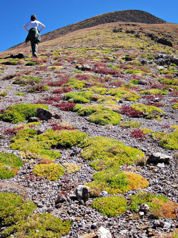 on the flanks of Lulu Mountain