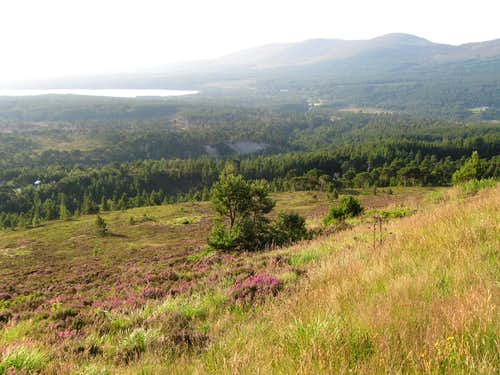 Cairngorm, natural tree line