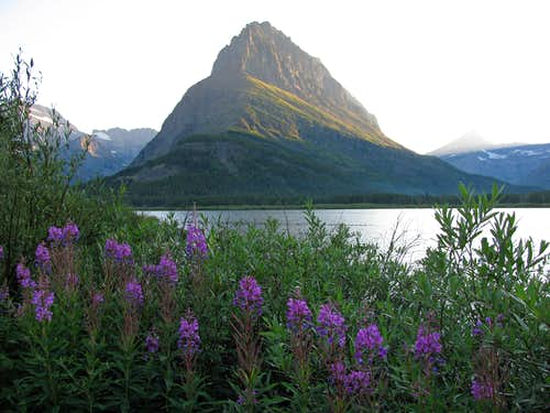Swiftcurrent Lake wildflowers