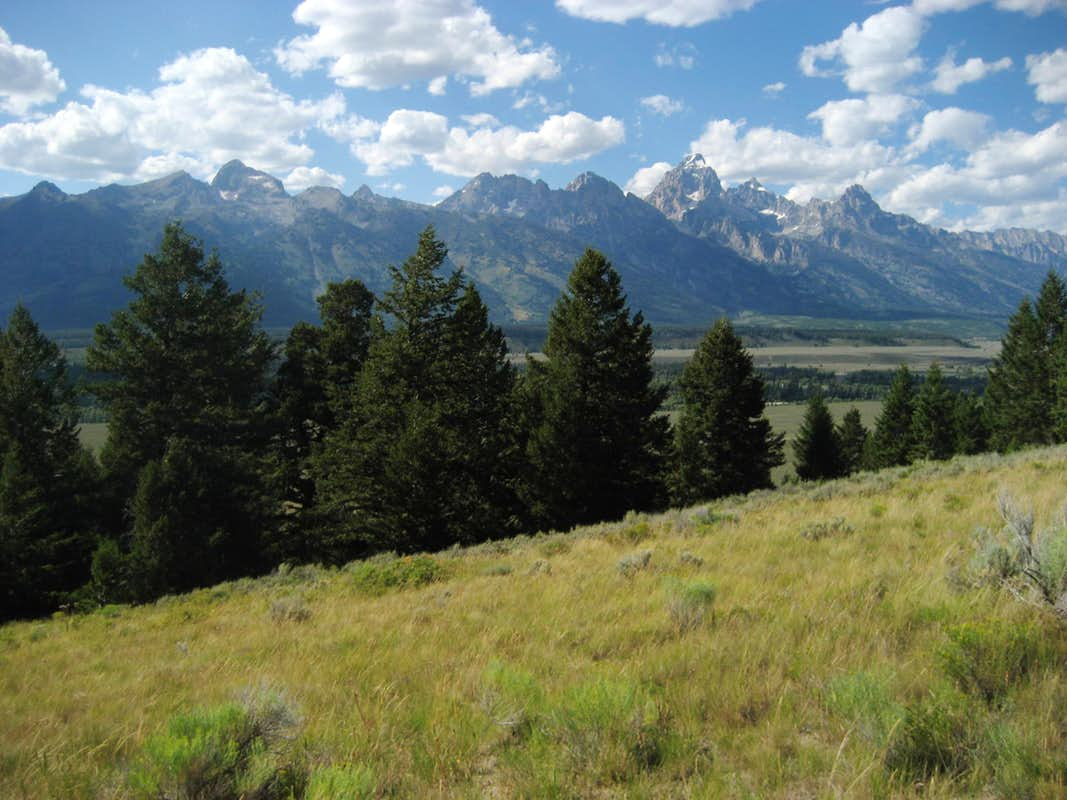 Tetons from Blacktail