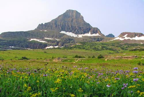 Logan Pass wildflowers