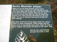 Rocky Mountain Junipers
