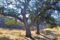oak trees along the trail