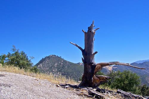 Summit\'s dead tree
