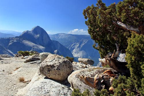 Half Dome from juniper tree on Mt. Watkins