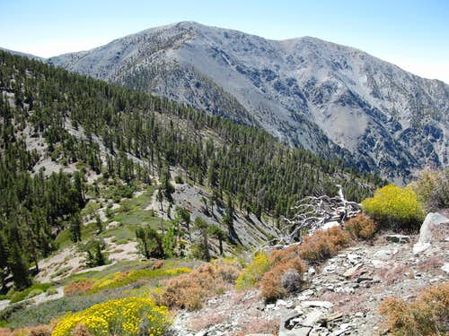 Pine Mtn-Dawson Peak Saddle