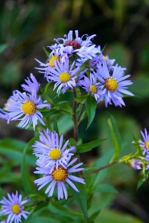 NY/NE Mountain Flora