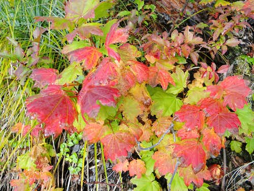 Fall colors on Mt. Washington (I-90)