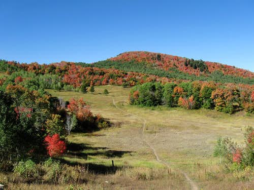 Buffalo Mtn - September color