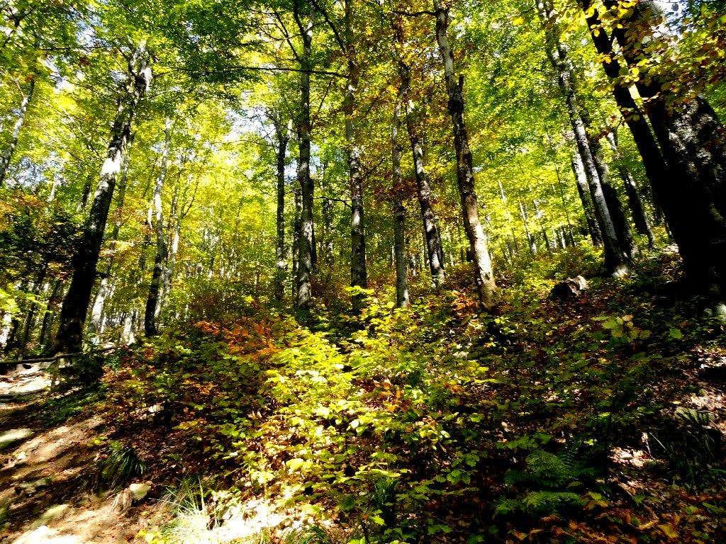 Autumn forest – slope of Połonina Caryńska