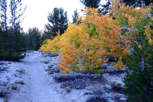 Fall Colors on the trail to Mt. Morgan