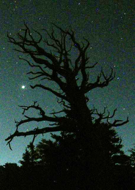 Muir Lake Tree with Jupiter