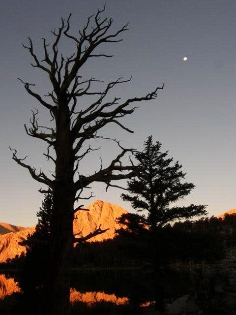 Dead tree, moon, & alpenglow