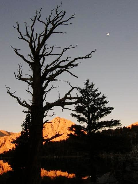 Dead tree, moon, & alpenglow