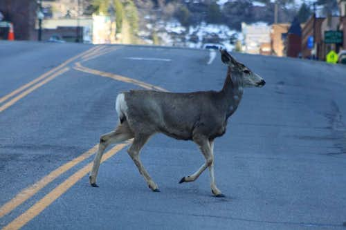 Busy traffic in Ouray
