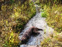 Cane enjoying Butte Creek