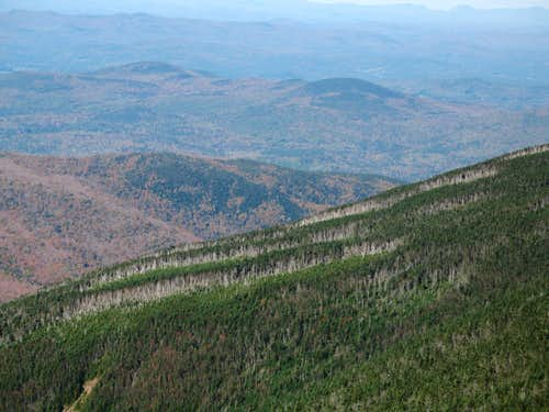 Fir Waves on Moosilauke
