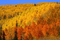 Beautiful Utah 2010 Fall Colors