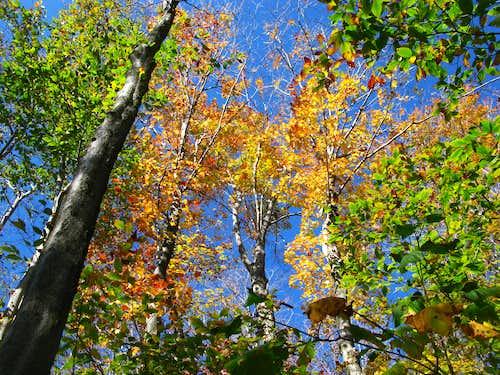 trees on Devil's Path