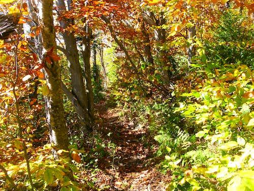 along the Hunter Mountain trail