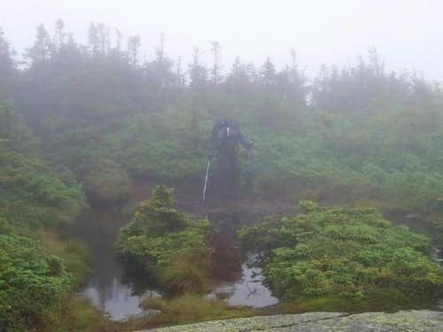 Summit bog and fog