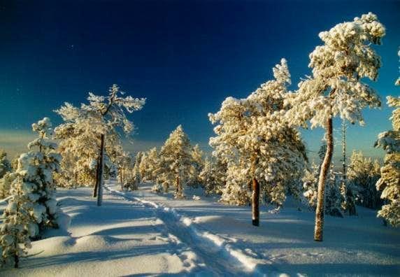 Walking trail on Ounasvaara hill