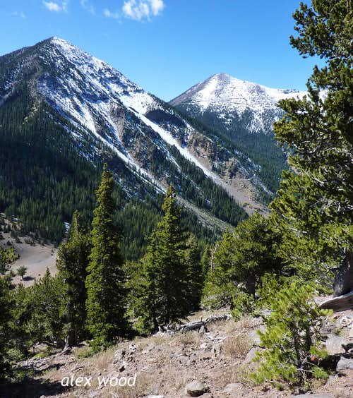 From Doyle