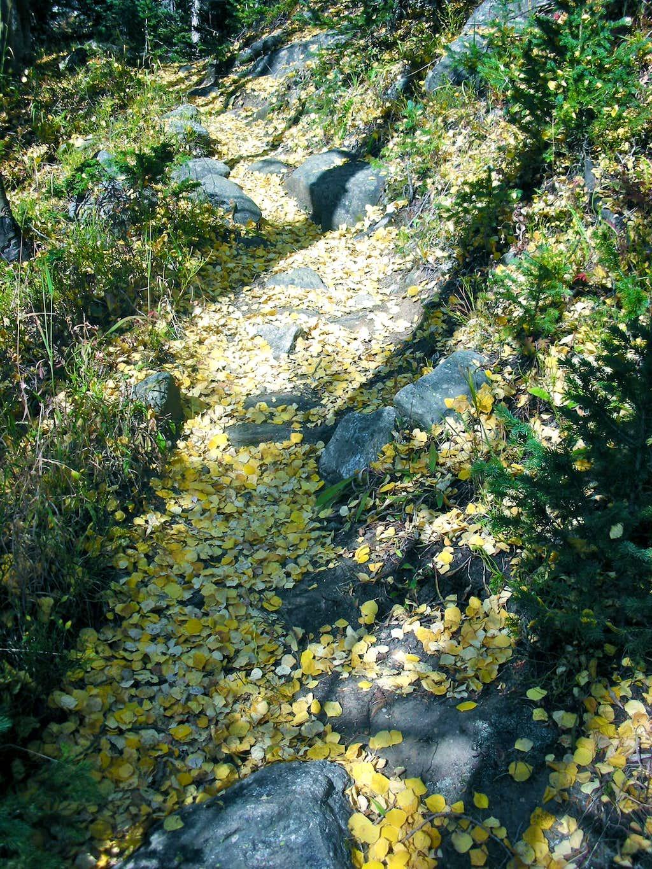 Aspen Leaves Galore