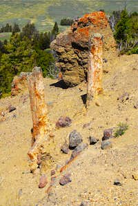petrified stumps